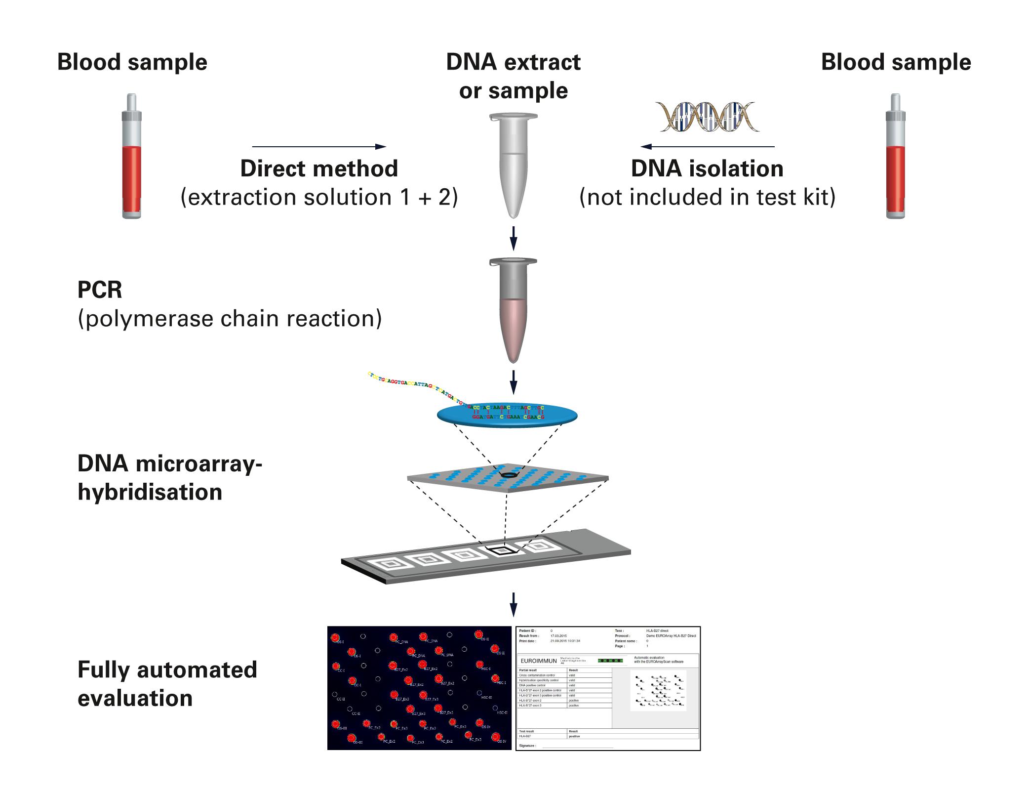 Microarray Euroimmun Ag